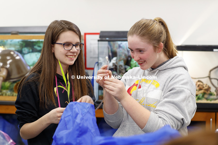Allison Ediger and Abigail Thacker work to get air bubbles out of a water-filled tube connected to a plant as part of their group experiment to measure photosynthesis. Students in LIFE 121L - Fundamentals of Biology 2 Laboratory, taught by Altangerel