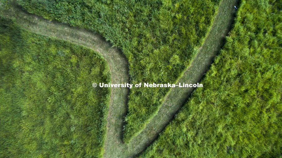 A trail complete with a cat cuts through the prairie habitat on University of Nebraska-Lincoln's east campus. July 31 2017. Photo by Craig Chandler / University Communication.