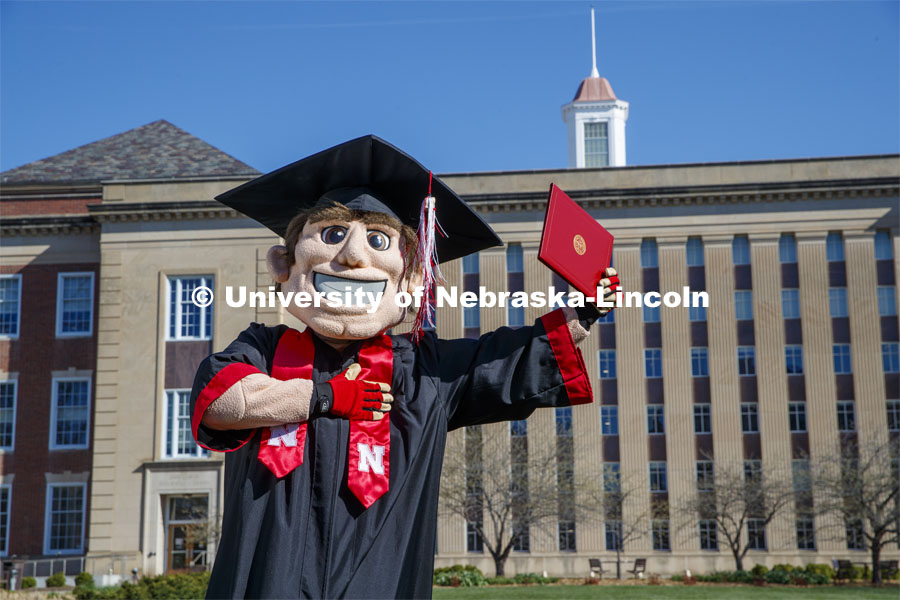 Herbie Husker stands in front of Love Library, proudly holding a diploma and is decked out in graduation attire for the Spring Commencement that was which streamed online and aired on NET because of the COVID-19 pandemic. April 10, 2020. Photo by Craig Chandler / University Communication.