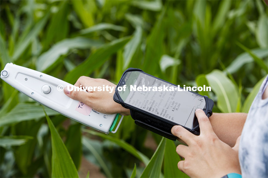 Mackenzie Zwiener, a graduate student in agronomy, takes a photosynthesis measurement of a corn leaf in the research fields at 84th and Havelock. June 30, 2020. Photo by Craig Chandler / University Communication.