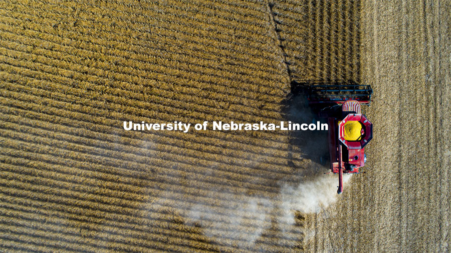 A combine works through a soybean field west of Firth, NE. Fall Harvest. October 6, 2020. Photo by Craig Chandler / University Communication.