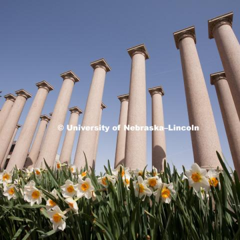Daffodils bloom in front of the columns on the University of Nebraska–Lincoln city campus on April 5, 2010. Photo by Craig Chandler / University Communications