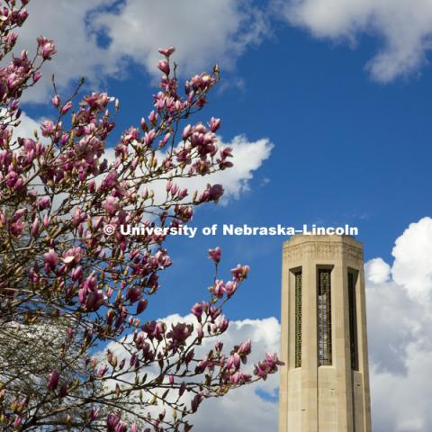 Mueller Bell Tower surrounded by the blooming spring trees. March 16, 2016, photo by Craig Chandler, University Communications.