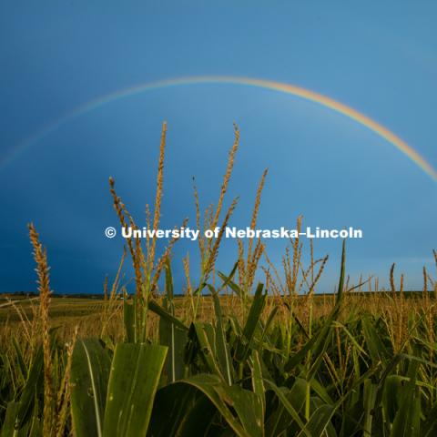 Rainbow over a cornfield southeast of Lincoln, NE. August 5, 2016. Photo by Craig Chandler / University Communication Photography.