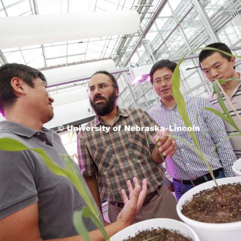 Harkamal Walia and other PIs in the grant discuss experiments in the LemnaTec High-Throughput Plant Phenotyping facility at the Greenhouse Innovation Center on Nebraska Innovation Campus. From left: Toshihiro Obata, Hongfeng Yu, and Qi Zhang. Not pictured