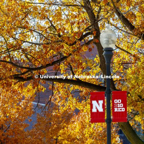 Lincoln trees display their fall colors on UNL's City Campus. November 15, 2017. Photo by Craig Chandler, University Communication Photography.