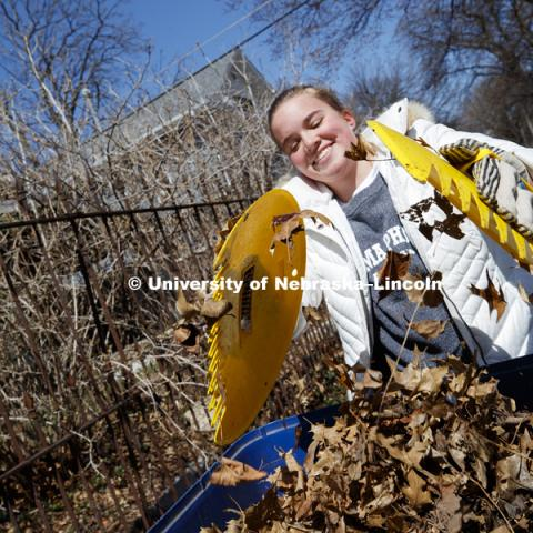 Amanda Lewis, Omaha, and her Gamma Phi Beta sorority sisters pick up leaves along P street during the Big Event. April 7,  2018. Photo by Craig Chandler / University Communication.