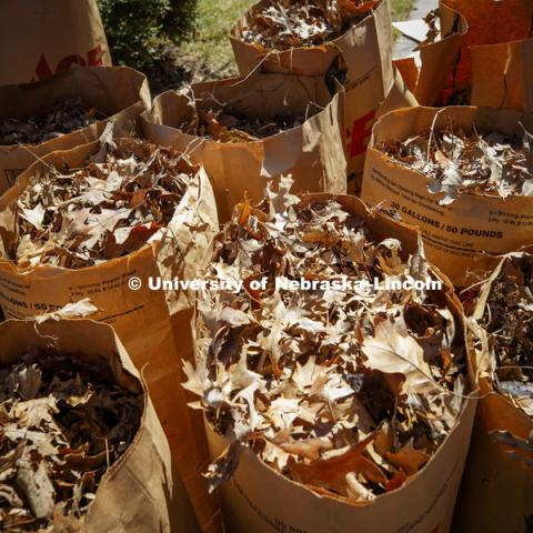 Bags are filled with leaves during the Big Event. April 7, 2018. Photo by Craig Chandler / University Communication.