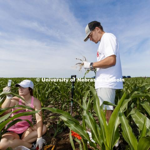 James Alfano Plant Science Innovation lab working on soil and root sampling in fields at ENREC. June 13, 2018. Photo by Craig Chandler / University Communication