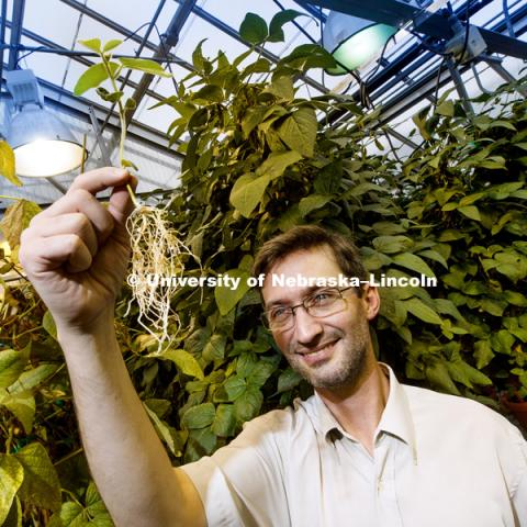 NSF CAREER awardee Marc Libault seeks to better understand soybeans and other legumes' mutually beneficial relationship with the bacteria rhizobia. His research could help lead to more efficient conversion of atmospheric nitrogen, called nitrogen fixation, and even to transferring the capability to other crops. Marc is pictured in the Beadle Greenhouse. November 30, 2018. Photo by Craig Chandler / University Communication.