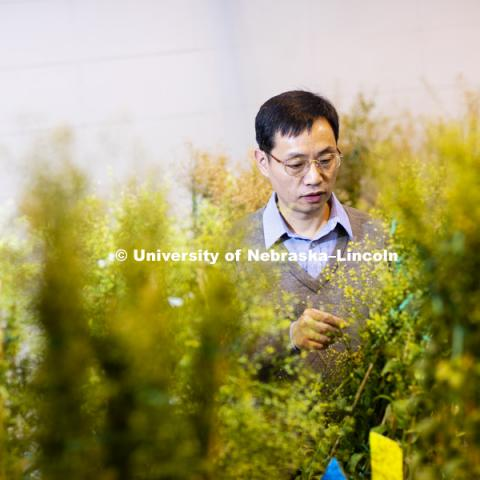 Lirong Zeng, Associate Professor of Plant Pathology, in his Beadle Hall lab. December 13, 2018. Photo by Craig Chandler / University Communication.