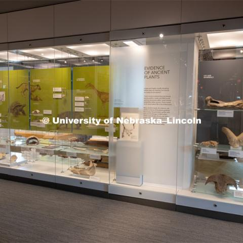 Cherish Nebraska opens to the public on Saturday, February 16 in the University of Nebraska State Museum in Morrill Hall. The new exhibit spaces celebrate Nebraska's natural heritage - the diversity of life that has been shaped over the millennia by Nebraska's changing environments. February 13, 2019. Photo by Greg Nathan / University Communication.