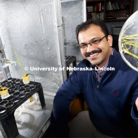 Nebraska's Joe Louis, assistant professor of Entomology, is testing the resistance of aphids to various varieties of sorghum and corn. A wire is adhered to an aphid's back with conductive paint. A plant is given an electric charge. As the aphid sucks the sugars in the plant, the electric flow increases and is measured. On aphid-resistant plants, the current barely registers. Louis holds a dish of leaves infested by corn-leaf aphids. Louis and his colleagues have found that spraying a corn plant with one of its own defensive compounds might reduce aphid colonization by as much as 30 percent. The lab setup is at left. February 22, 2019. Photo by Craig Chandler / University Communication