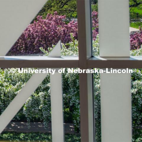 Blooming spring flowers and trees can be seen by looking through the windows of the Nebraska Union on City Campus. April 24, 2019. Photo by Greg Nathan / University Communication.