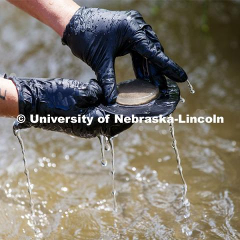Water runs off a sand sample as Kayla Vondracek brings it to the surface. Jessica Corman, assistant professor in the School of Natural Resources, UCARE research group researching algae in the Niobrara River. Fort Niobrara National Wildlife Refuge. July 13, 2019. Photo by Craig Chandler / University Communication.