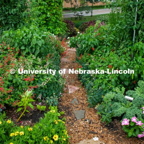 Backyard Farmer garden on UNL's East Campus. August 7, 2019. Photo by Gregory Nathan / University Communication.