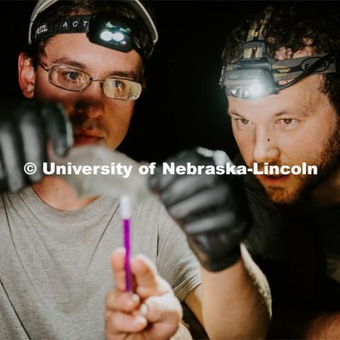 Nebraska graduate student Christopher Fill is studying the patterns of bats living at Homestead National Monument near Beatrice. Christopher Fill and Ben Hale hold up a bat and study its wing. August 19, 2019. Photo by Justin Mohling / University Communication.