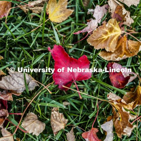Fall leaves in the grass on City Campus. October 28, 2019. Photo by Craig Chandler / University Communication.