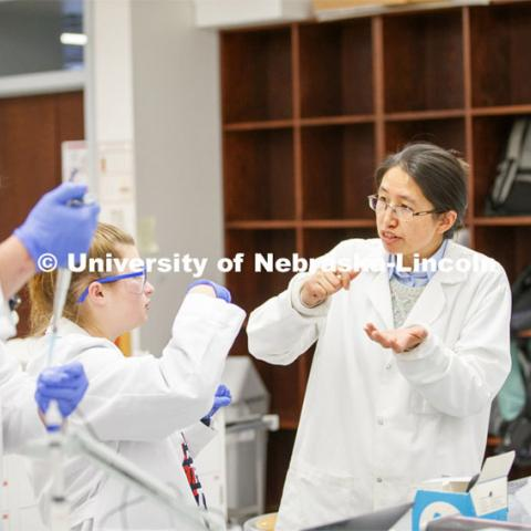 Limei Zhang, Assistant Professor, Department of Biochemistry/Redox Biology Center works with growing crystals in BIOC 433H - Honors: Inquiry-based Biochemistry Laboratory.  November 20, 2019. Photo by Craig Chandler / University Communication.