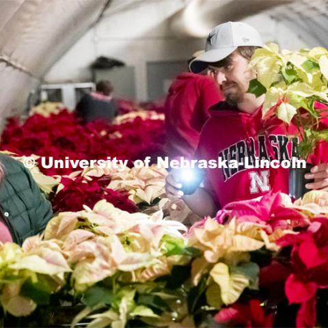 Twas the night before the poinsettia sale and all through the greenhouse, Nebraska Horticulture Club members sort poinsettias for the annual sale. Shelby Binns, left, and Korbin Tyler sort plants by pot size. The greenhouse at night isn't brightly lighted so Korbin uses his phone's flashlight to help with sizing the plants by pot size. December 4, 2019. Photo by Craig Chandler / University Communication.