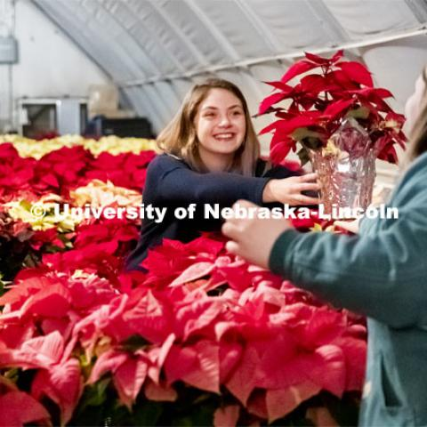Twas the night before the poinsettia sale and all through the greenhouse, Nebraska Horticulture Club members sort poinsettias for the annual sale. Kaley Wilcox hands a plant to Leslie Aase as they sorted the plants by size. December 4, 2019. Photo by Craig Chandler / University Communication.