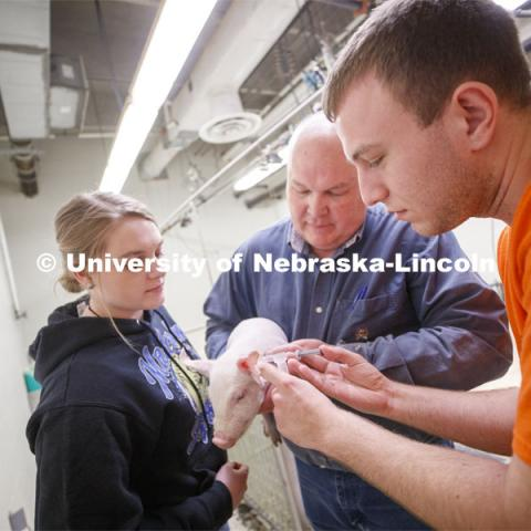 Laura Reiling (left), freshman in Animal Science from Malcom, NE, and Clayton Thomas (right), freshman in Animal Science from Bloomington, IL, discuss a baby pig with Bryan Reiling, associate professor in Animal Science. Students in ASCI 150 - Animal Production Skills. March 12, 2020. Photo by Craig Chandler / University Communication.