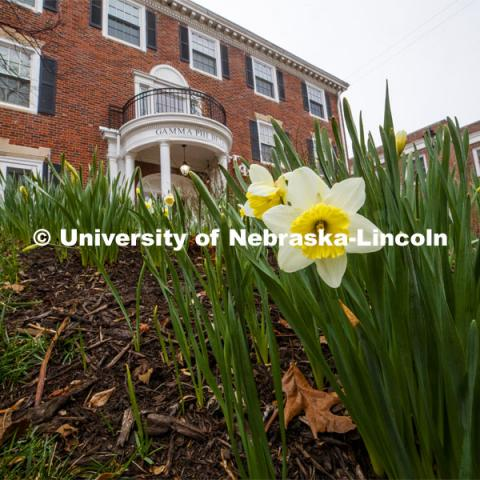 City campus begins to come alive as spring flowers and trees bloom. March 27, 2020. Photo by Craig Chandler / University Communication.