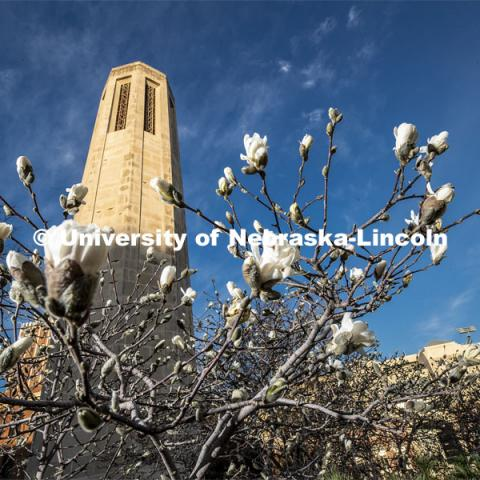 Blooms, blue sky and the Mueller Bell Tower on city campus. March 30, 2020. Photo by Craig Chandler / University Communication.