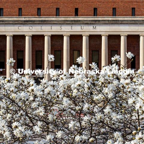 It's spring on City Campus as trees flower in front of the Coliseum. April 1, 2020. Photo by Craig Chandler / University Communication.
