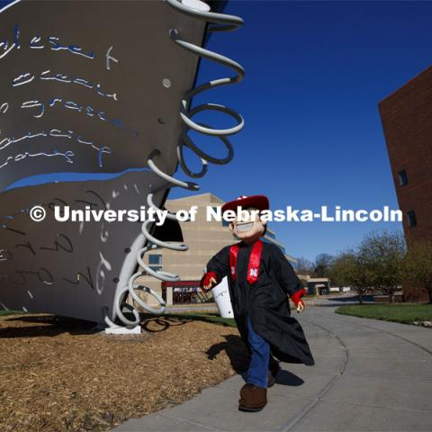 Herbie Husker walks past the Torn Notebook sculpture on City Campus wearing his graduation gown for the Spring Commencement that was which streamed online and aired on NET because of the COVID-19 pandemic. April 10, 2020. Photo by Craig Chandler / University Communication.