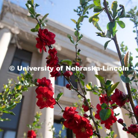 Spring flowers bloom on East Campus in front of Chase Hall. April 21, 2020. Photo by Gregory Nathan / University Communication.
