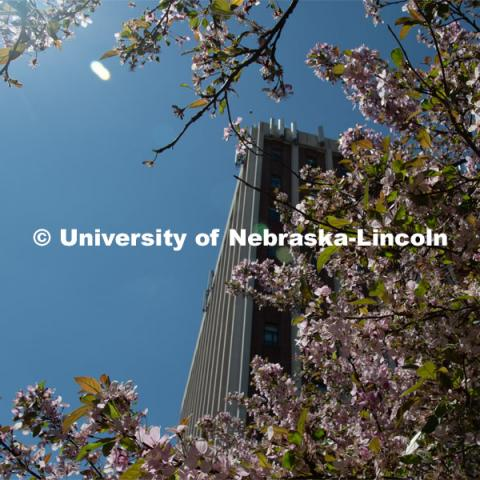 Spring trees and flowers bloom on City Campus near Old Father Hall. April 21, 2020. Photo by Gregory Nathan / University Communication.