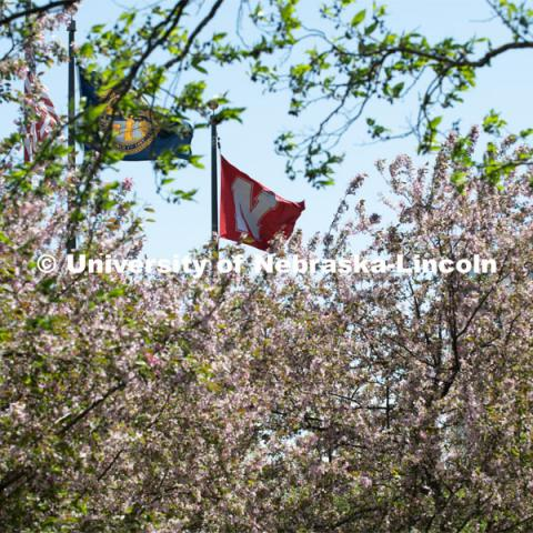 Spring trees bloom on City Campus near the American, Nebraska, and University flags. April 21, 2020. Photo by Gregory Nathan / University Communication.