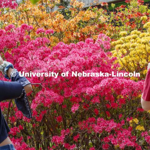 Destinee Turner and Audrey Aven photograph a Rosy Lights Azalea and a Narcissiflorum Rhododendron which are a beacon of color in East Campus' Maxwell Arboretum. East campus blooms. May 12, 2020. Photo by Craig Chandler / University Communication.