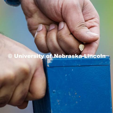 Ravi Mural drops a corn kernel into a hand planter. James Schnable's group hand plants corn and sorghum seeds at the East Campus ag fields. May 20, 2020. Photo by Craig Chandler / University Communication.