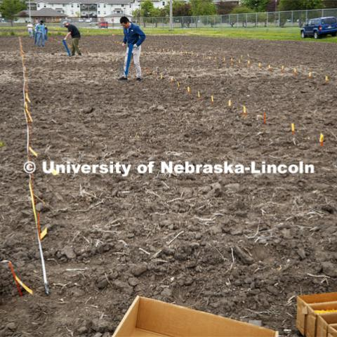 Guangchao Sun plants his section of the field. James Schnable's group hand plants corn and sorghum seeds at the East Campus ag fields. May 20, 2020. Photo by Craig Chandler / University Communication.