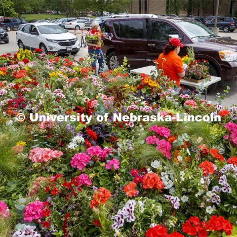 Stacy Adams, Associate Professor of Practice for Agronomy and Horticulture, passes out flats of flowers. The University of Nebraska-Lincoln Horticulture Club hosted its first-ever plant giveaway Thursday, a replacement for the club's annual plant sale and fundraiser was due to the university shutdown in response to the global pandemic in mid-March. A prepackaged assortment of plants in a cardboard flat will be ready for each recipient. There were two sessions of giveaways with 100 flats of plants at each one. It only took 22 minutes to give away the morning allocation of flats. May 21, 2020. Photo by Craig Chandler / University Communication.