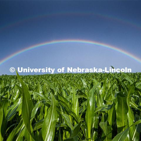 Rural landscape of a double rainbow over a corn field north of Adams, NE. June 22, 2020. Photo by Craig Chandler / University Communication.