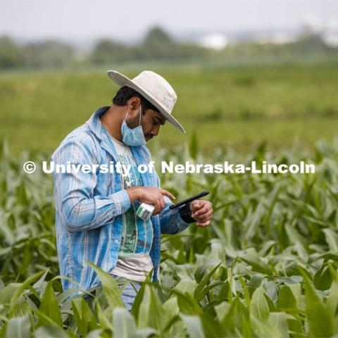 Ravi Mural, post doc in agronomy, takes a photosynthesis measurement of a corn leaf in the research fields at 84th and Havelock. June 30, 2020. Photo by Craig Chandler / University Communication.
