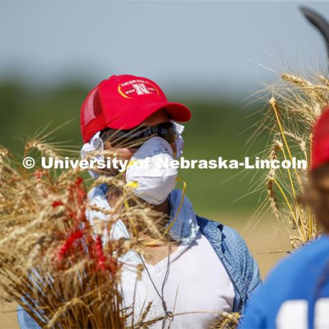 Ajay Rathore, graduate student in educational psychology, brings in the sheaves of research wheat to be thrashed. The plots are part of Stephen Baenziger, professor and Wheat Growers Presidential Chair in the University of Nebraska–Lincoln's Department of Agronomy and Horticulture research. Research fields at 84th and Havelock. July 8, 2020. Photo by Craig Chandler / University Communication.
