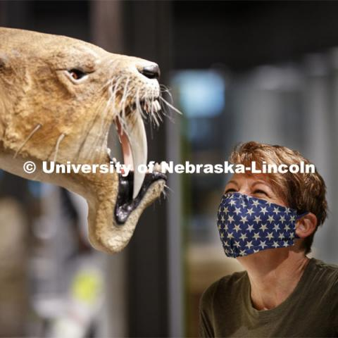 Pam Sniff looks over a maskless Barbourofelis fricki in the new Cherish Nebraska hall. Nebraska State Museum in Morrill Hall will open August 5 with new procedures to keep patrons healthy and safe. July 29, 2020. Photo by Craig Chandler / University Communication.