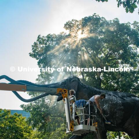 Workers scrub Archie with scrub brushes and a power washer for his annual bath. August 13, 2020. Photo by Gregory Nathan / University Communication.