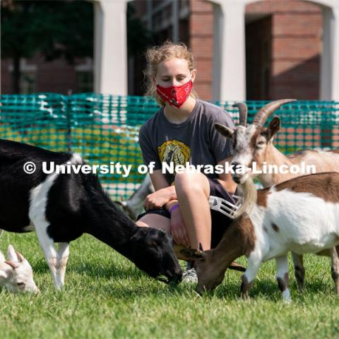 Freshman Morgan Rawlins gets surrounded by goats during Wellness Fest at Meier Commons. August 22, 2020. Photo by Jordan Opp for University Communication.