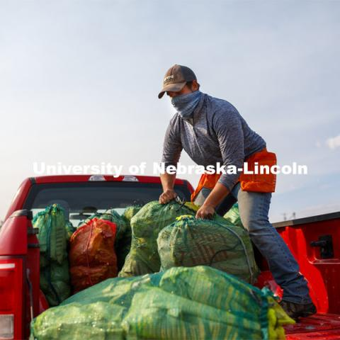 Kyle Linders packs mesh bags full of bagged sorghum panicles into the pickup bed following harvest. The seeds will be sorted and used to plant test plots next year. Sorghum harvesting of seed varieties to be evaluated for larger plot tests. East Campus ag fields. October 14, 2020. Photo by Craig Chandler / University Communication.