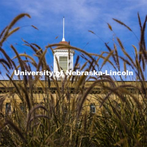 Tall grasses in front of the Love Library cupola. City Campus. October 28, 2020. Photo by Craig Chandler / University Communication.