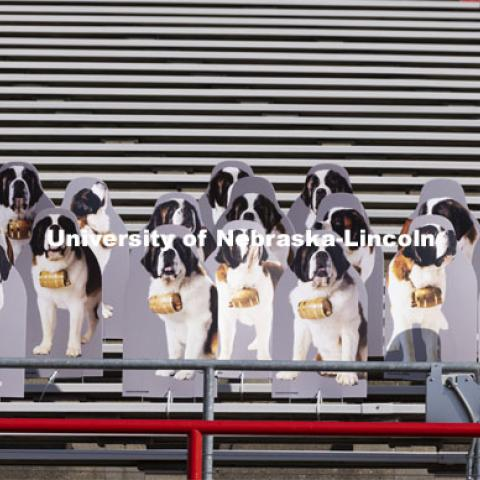 A pack of 25 Saint Bernards stand ready for a stadium rescue as they howl for the Huskers. The dogs were purchased by Applied Underwriters, an Omaha company, as a way to connect their employees who are mostly working at home due to the global pandemic. More than 6,000 corrugated plastic cutouts fill the lower level of east stadium, the tunnel walk, and part of north stadium to remind the Huskers who has the Greatest Fans in College Football. November 12, 2020. Photo by Craig Chandler / University Communication.