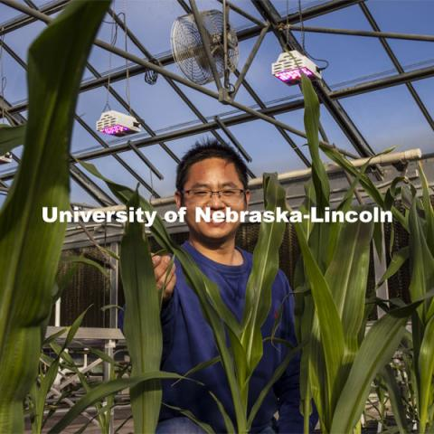 Nebraska's Jinliang Yang, assistant professor of agronomy and horticulture, and Gen Xu (picutred), post doc and first author of the study and their colleagues, have shown that differences in how genes are turned on and off, rather than actual changes in DNA, may explain some important physiological differences between modern-day maize and a 10,000-year-old ancestral species. November 18, 2020. Photo by Craig Chandler / University Communication.