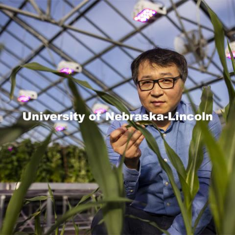 Nebraska's Jinliang Yang (pictured), assistant professor of agronomy and horticulture, and Gen Xu, post doc and first author of the study and their colleagues, have shown that differences in how genes are turned on and off, rather than actual changes in DNA, may explain some important physiological differences between modern-day maize and a 10,000-year-old ancestral species. November 18, 2020. Photo by Craig Chandler / University Communication.