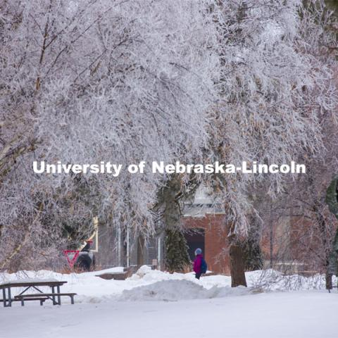Students walk to class as frost coats the trees in the green space between the Sheldon Art Museum and Architecture Hall. February 2, 2021. Photo by Craig Chandler / University Communication.
