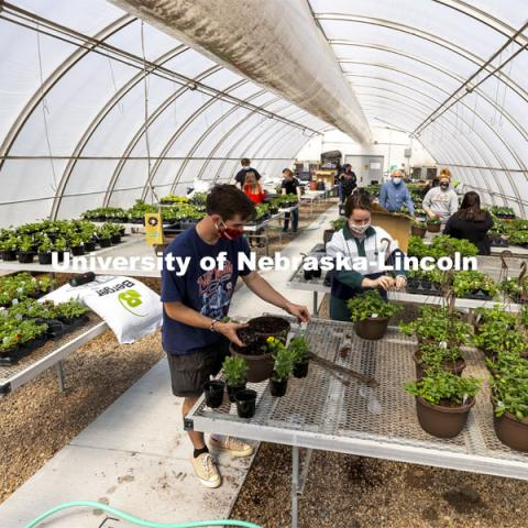 Members of the horticulture club prepare plants in the greenhouses on east campus. The plants will be sold at their annual spring sale. April 1, 2021. Photo by Craig Chandler / University Communication